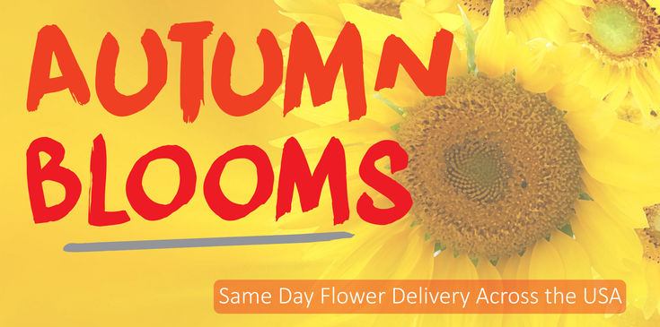 Blooming autumn plants and fall colored flowers are ready to deliver across the USA.